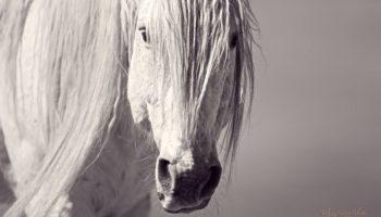 Horse Wild spear 2 (2)